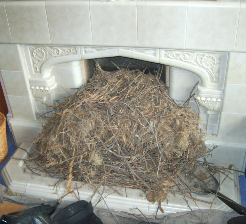 THE DREADED BIRD'S NEST